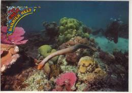 GREAT BARRIER REEF - Queensland, Olive Sea Snake - Great Barrier Reef