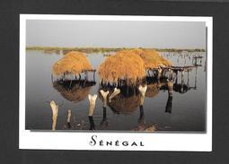 SÉNÉGAL - AFRIQUE - CHARMES ET COULEURS DU SÉNÉGAL FADIOUTH - PHOTO AM .BREGER - Sénégal