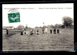 Le Safran La Cueillette Environs De Pithiviers écrite 1909 Lot 1010 - Pithiviers