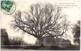 76 Environs De FECAMP - Dans Le Parc Du Chateau Des Ifs - Le Gros Tilleul  (Recto/Verso) - Fécamp