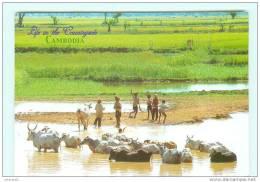 Countryside , élevage