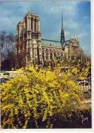 PARIS -  Notre-Dame,  1970,  Nice Stamp - Notre Dame De Paris