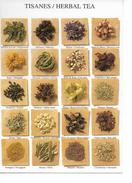 LES TISANES - HERBAL TEA / PHC 1523 De 1997 / CPM VIERGE NEUVE / RARE +++++ - Piante Medicinali