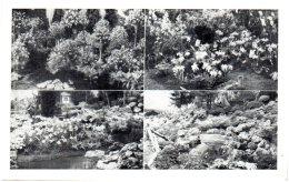 GENT - Floralies Gantoises 1955   (Recto/Verso) - Gent