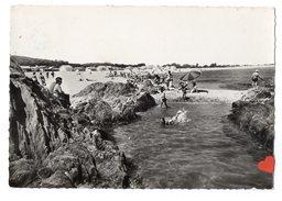 14775-LE-66-LA COTE VERMEILLE--La Plage Du Racou-Argelès-sur-Mer-----------animée - Argeles Sur Mer