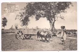 MOÇAMBIQUE - CARRO DE BOIS NA QUINTA DA MISSÃO - Mozambique