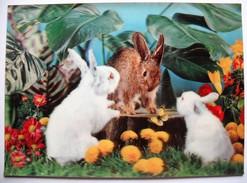 CARTOLINE ANNI '70 - TRE CONIGLI - THREE RABBITS - Cartoline Stereoscopiche