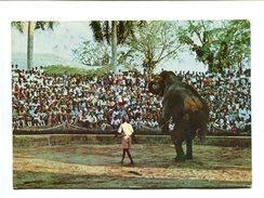 Cp - ELEPHANT - SRI LANKA - Elephant Circus At The Zoological Gardens Dehiwela - Elephants