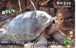 TARJETA DE BELICE DE UNA TORTUGA (TURTLE) - Belize