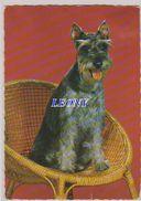 CPSM 10x15    Représentant Un  CHIEN Assis Sur Une CHAISE En OSIER - édit PICARD 1969 - Honden