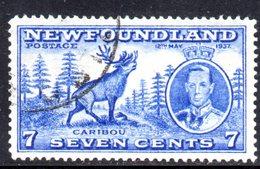 XP2948 - NEWFOUNDLAND 1937 ,  Gibbons 7 Cent N. 259  Usato - Terre-Neuve