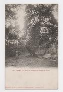 51 MARNE - VERZY Un Faux De La Forêt, La Chaire Du Curé - Verzy