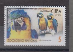 Cuba YV 4440 O 2007 Ara - Papegaaien, Parkieten