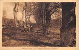 80-SAINT-VALERY-SUR-SOMME- LE CAP-HORNU- HERBAGES - Saint Valery Sur Somme