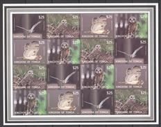 O34 2012 KINGDOM OF TONGA FAUNA BIRDS OWLS 1SH !!! BIG MICHEL !!! MNH