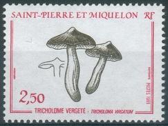 Saint Pierre And Miquelon, Mushroom, Tricholoma Virgatum, 1989, MNH VF - St.Pierre & Miquelon
