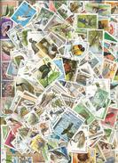 Vrac De Plusieurs Centaines De Timbres Tous Différents Sur Le Thème Des Oiseaux