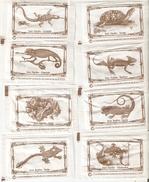 Sobres De Azucar Vacios. Coleccion Reptiles. (ref. 25c-717) - Azúcar