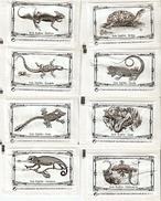 Sobres De Azucar Vacios. Coleccion Reptiles. (ref. 25c-718) - Azúcar