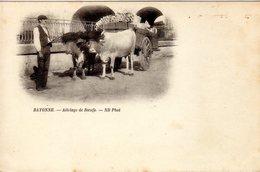 65)  BAYONNE    -   Attelage   De  Boeufs - Bayonne