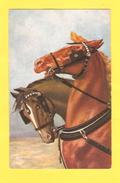 Postcard - Horses     (24750) - Chevaux