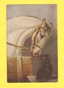 Postcard - Horses     (24751) - Chevaux