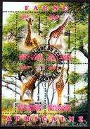 CONGO Cinderella  - Giraffes Girafes Giraffen Girafe Giraffe Jirafa Jirafas - Mammals Fauna Animals - Giraffe