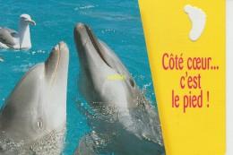 Coté Coeur C Est Le Pied - Dauphins