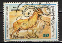 TUNISIA - 1980 - MUFLONE - USATO - Tunisia (1956-...)