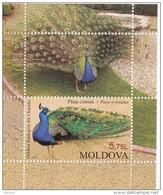 Moldova ,  2013 , Chisinau Zoo, S/s , Birds , Peacocks ,  MNH