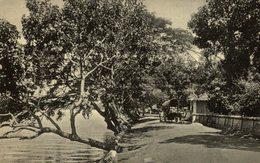 The Old Rest House Overlooking The Lagoon    Ceylon Sri Lanka - Sri Lanka (Ceilán)