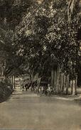 PERADENIYA ROAD KANDY      Ceylon Sri Lanka - Sri Lanka (Ceilán)