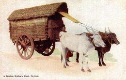 A DOUBLE BULLOCK CART    Ceylon Sri Lanka - Sri Lanka (Ceilán)