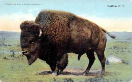 Buffalo NY New York - Bison - Buffalo