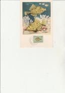 MOZANBIQUE - CARTE MAXIMUM  AFFRANCHIE N° 392 POISSON - ANNEE 1951 - Mozambique