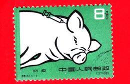 CINA - Usato - 1960 - Agricoltura - Suini - Maiale - Pig Breed - 8 - 1949 - ... People's Republic