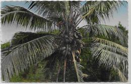 CPSM 9 X 14 Guadeloupe Colonies Françaises Non Circulé éditeur Yvon BC13 - Pointe A Pitre