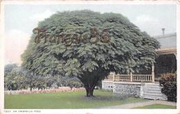 An Umbrella Tree - Ed. Detroit Publishing - Detroit