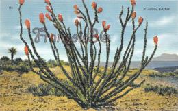 Ocotillo Cactus - Sonoran Chihuahuan Desert - Etats-Unis