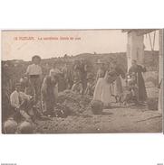 HLVTP7281CPA-LFTMD6618TAVI.Tarjeta Postal DE HUELVA.Personas,UVAS,personas En LA VENDIMIA En HUELVA - Viñedos