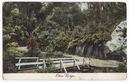 NEW ZEALAND Scenic OTIRA GORGE - Plants And Bridge C1900s-1910s Vintage Postcard - New Zealand