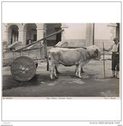 COSTP0637CPA-LFTM2090TAEQ.Tarjeta Postal Costumbrista Española.Tipo Vasco Con Carreta De Bueyes - Equipos