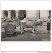 VCYTP3700BCPA-LFTM2090TTSC.Tarjeta Postal De VIZCAYA.Animales.Tipo Vasco Con Carreta De Bueyes En BILBAO - Postales