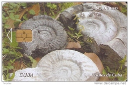 Nº 211 TARJETA DE CUBA DE UNOS AMMONITES FOSILES (CARACOL-ESCAGOT)