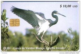 185 TARJETA DE CUBA DE UNA GARZA DE VIENTRE BLANCO (BIRD-PAJARO)