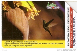 UR-030 TARJETA DE CUBA DE UN COLIBRI (BIRD-PAJARO)