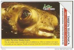 UR-033 TARJETA DE CUBA DE UN PEZ ERIZO (FISH) - Cuba