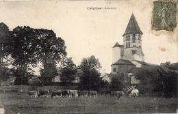 - CEIGNAC -190? -l´Eglise (troupeau De Vaches)- - France