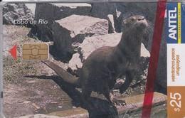 Nº 302 TARJETA DE URUGUAY DE EL LOBO DE RIO (NUTRIA)  (NUEVA-MINT)