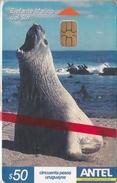 Nº 295 TARJETA DE URUGUAY DEL ELEFANTE MARINO DEL SUR (SEAL-FOCA)  (NUEVA-MINT)